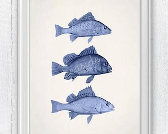 Blue Fishes collection. Sea life print- Vintage  fishes art,  Ocean naturalist illustration, Sea shore house decor,Blue color fish SPA302