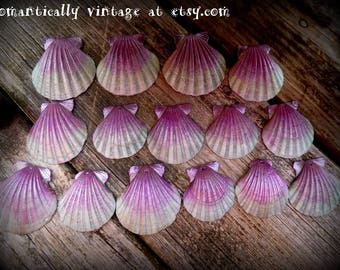 Seashells, Drilled, Beach,  Decor, Crafts, Nautical, Jewelry, Photo Props, Displays, Nature, Victorian, Summer