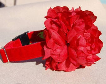 Flower dog collar,Perfect gift for dog ,cute red panne velvet with big red flower dog collar.Afternoon tea dog collar.dog wedding collar