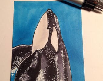 Kyuquot killer whale ACEO/sketchcard