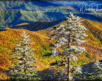 Frost Above Colors Below E256.  Clingman's Dome, Smoky Mountains, Frost, Autumn Leaves Color, Tennessee, Tourist, Vacation, Destination