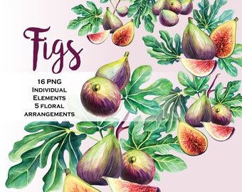 Fig Clip Art / Watercolor Figs / Autumn garden. Fall flowers, wedding clip art, digital clipart, hand painted bouquets