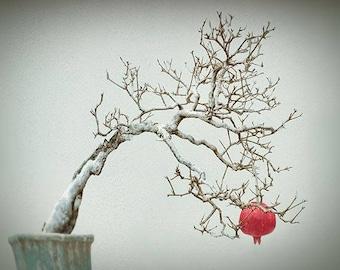 Pomegranate Art, Minimalist Art Print, Pomegranate Tree, Surreal Art, Tree Photography, Bare Tree Print