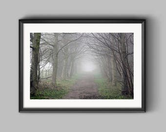 Big Wood, Erddig, in the mist an Erddig Countrypark Woodland Landscape Photograph.