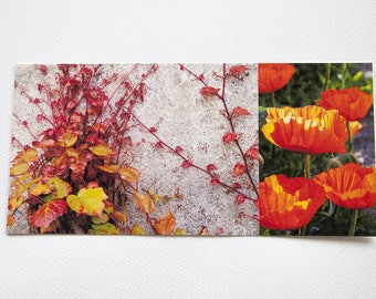 "Red long ""nature"" poppies and Ivy card printed on cotton paper fine art"
