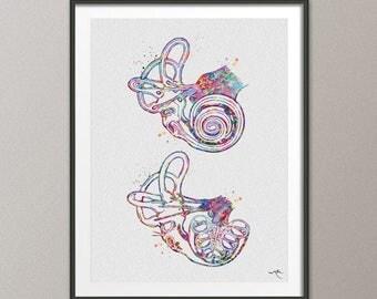 Cochlea of Inner Ear Anatomy Watercolor Print Audiologist Gift Audiology Art Science Art Ear Diagram Clinic Decor Vestibule Medical Art-1085