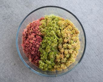 Sphagnum Variety Pack (For Terrariums, Carnivorous Plants)