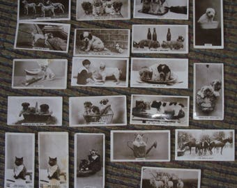 20x Old Real Animals Photo~Miniature DeReszke Cigarette Cards of Dogs, Cats, Puppies, Kids and Horses