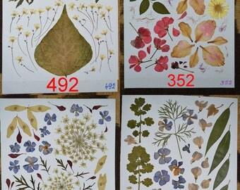 Pressed flowers, dried flowers, pressed leaves, dried leaves, pressed petals, dried petals, Oshibana supplies #492 #352 #515 #494