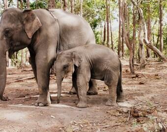Chiang Mai Elephants Color Photo, Elephant Photography, Instant Download, Art Prints, Decor, Digital Download, Elephant Art, Print