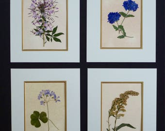 FREE SHIP  Real Pressed Flowers Pressed Botanical Art Herbarium Collection 8x10