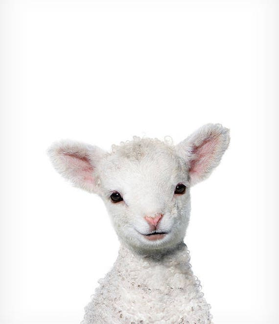 This is a picture of Effortless Printable Images of Animals