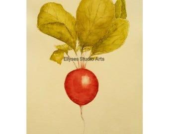 Pen and ink watercolor radish print