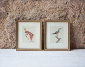 Vintage Pair of Framed Bird Paintings on Silk