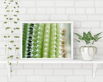 Saguaro Cactus Photography, natural, desert landscape, desert, home decor, boho, hipster, saguaro cactus, saguaro, cactus, photography, art