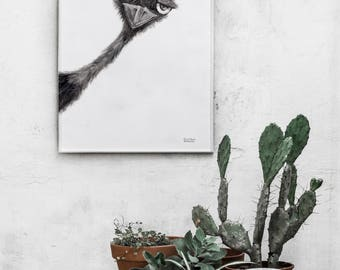 Ostrich illustration, decor, pencil drawing, wall prints, home decor, illustration print, charcoal drawing, wall art prints, wall prints