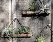 Set of Three Hanging Wood & Cotton Cord Air Plant Holders, 3 Color Options (shown here in Coffee Bean) Vegan! Best Seller!