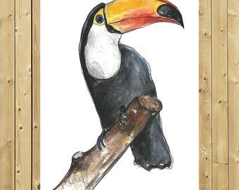 Toucan, Tucano, Toucan Print, illustration in watercolour, sheet A5, A4 or A3,, wall decor