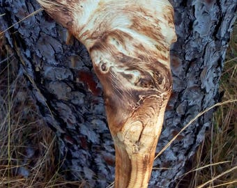 Tree of Heaven Walking Stick - Walking cane - Ailanthus Stick