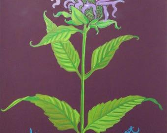 Wild Bergamot Botanical Illustration Painting