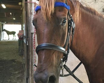 Handmade Equine Royal Blue Browband for horses