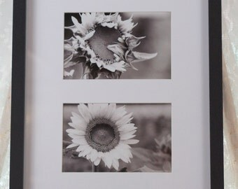 Black and White Sunflower photo collage