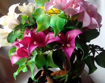 "Flower arrangement ""Bougainvillea"""