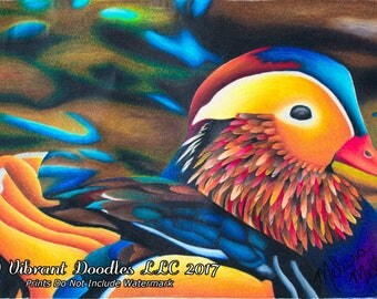 Murphy The Mandarin Duck [Print]