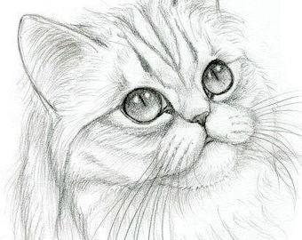 Chinchilla Persian Kitten Original Graphite Portrait