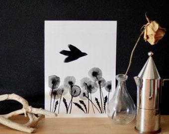 Dandelions-High quality Print illustration and frame