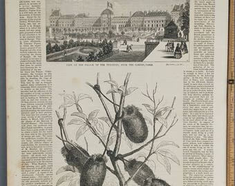 View of the Palace of the Tuileries, from the Garden, Paris from 1854. The Bombyx Paphia. Large Antique Engraving, About 11x15