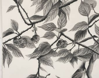Tree Branches with Bird