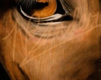Eye Spy | horse eye