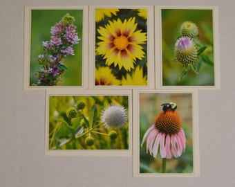 5 Oklahoma Native Plants Fine Art Photo Card Set, Wildflower Notecard Set, Sympathy Card, Any Occasion Card, Blank Card Set