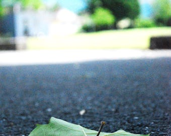 Interlaken fallen leaf