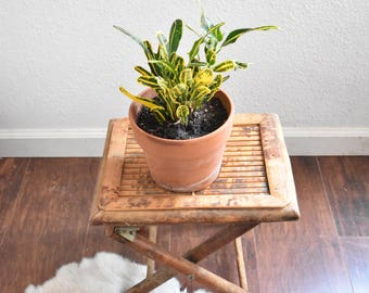mid century rattan bamboo mini table plant stand