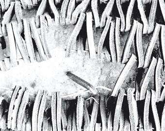 Rubber Mat, Black and White Fine Art Photograph monotone pattern modern art photography