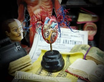 ANATOMICAl HEART  MODEL  Medical Prop miniature for dollhouses 1:12  scale cabinet of cusiosities by D. Zalvez