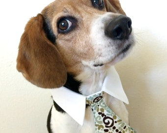 Geometric Swirl Bow Tie, Necktie, or Bow on a Shirt Style Collar for both Dogs & Cats