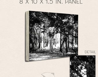 Black and White, 8x10, B&W Photography, North Carolina, State Park, Carolina Beach, trees, forest, nature, photography, art prints