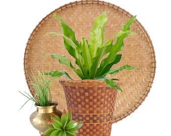 Multi Color Woven Rattan Plant Basket Boho Wicker Planter Basket Plant Holder Natural Bohemian Decor Hand Woven Textured Basket Jungalow