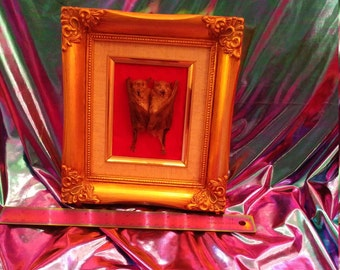 Taxidermy love bats