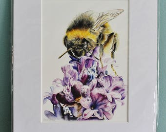 Bumblebee on Lavender Watercolour Painting - Insect - Mounted Giclee print - Nature Art Poster - Picture and gift for the home