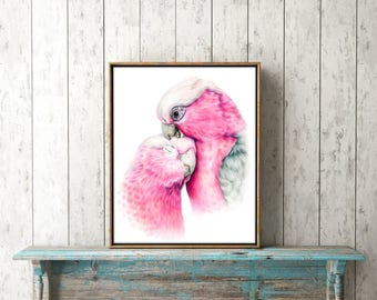 Galah colored pencil drawing ORIGINAL - Art by Kerli