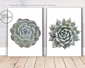 CACTUS SUCCULENTS - 2 x Wall Art Print Poster Canvas - On Trend Scandi