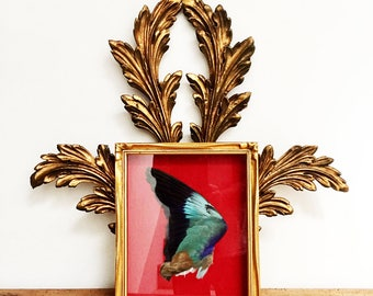 Vintage French Taxidermy Display, An Exquisite and Unique Kingfisher Wing Framed in a Magnificent Box Frame, Cabinet of Curiosities, 1955