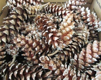 65-75 Eastern White Pine Cones, Natural Pine Cones, Holiday Crafts, Bulk Pine Cones