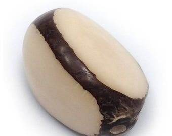 SALE 15% OFF Tagua Nut, nature, 40mm, three sides, 1 piece, Anh