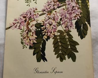 Gliricidia Sepium (Madre de Cacao) Bernard & Harriet Pertchik 1951 Print from Flowering Trees of the Caribbean Alcoa Steamship