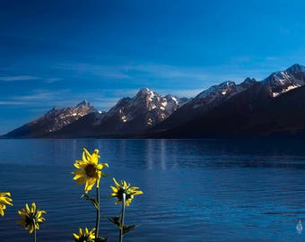 Grand Tetons and Flowers